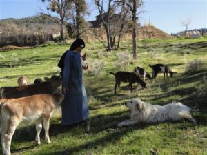 A Sister of the Norbertine Canonesses tends to the animals at the monastery in Tehachapi. The cloistered Sisters live on a secluded, self-sufficient life in the mountains and sell the goods they make in a gift shop.